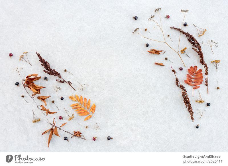 Herbstflachslage aus einfachen Trockenpflanzen Frucht elegant Stil Design Garten Kunst Kunstwerk Natur Pflanze Baum Blatt Wildpflanze Park Wald Sammlung Beton