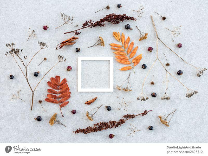 Weiße Rahmen und trockene Herbstpflanzen auf Betonuntergrund Frucht elegant Stil Design schön Garten Kunst Kunstwerk Natur Pflanze Baum Blatt Wildpflanze Park