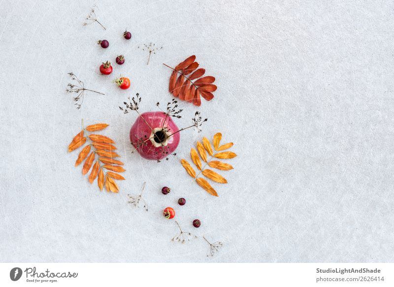 Keramische Vase und trockene Herbstpflanzen und -blätter Frucht elegant Stil Design schön Garten Kunst Kunstwerk Natur Pflanze Baum Blatt Grünpflanze