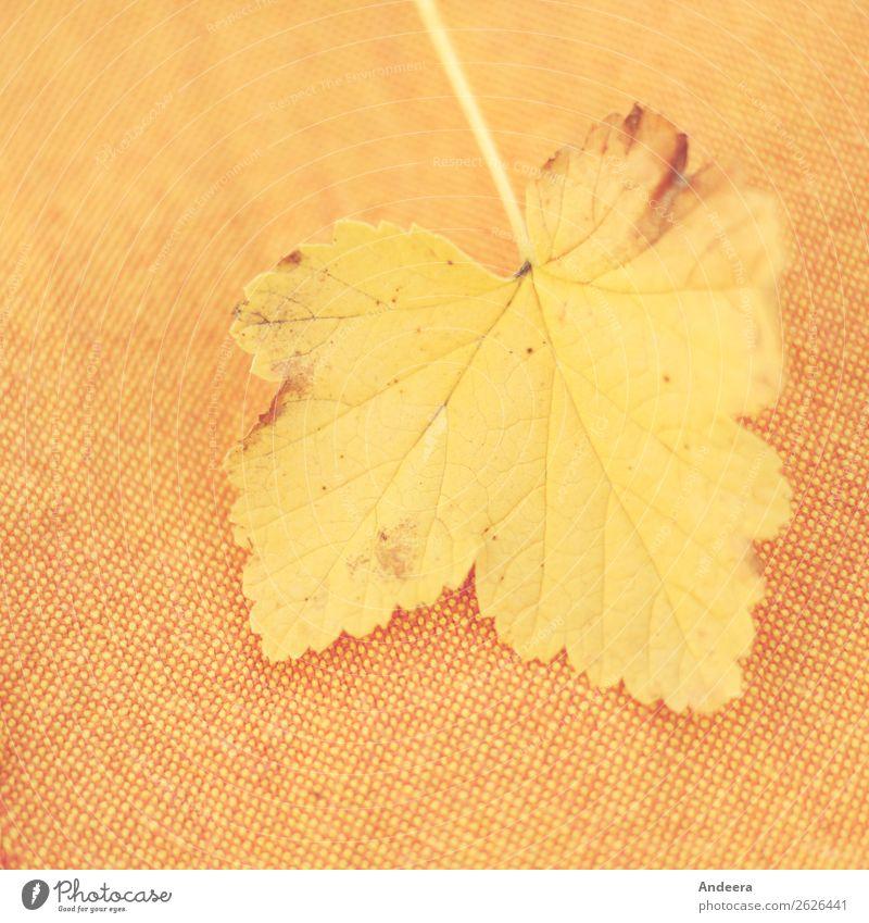Gelbes Blatt auf orange-braun-gelbem Stoff Umwelt Natur Pflanze Herbst Klima Wetter Dürre fallen trocken Wärme Vergänglichkeit Wandel & Veränderung Jahreszeiten