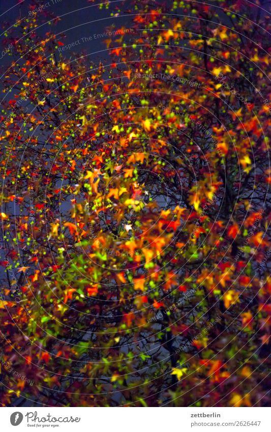 Platane am Abend/im Herbst Abschied Ast Baum Blatt mehrfarbig dunkel Ende Farbe Garten Herbstlaub Traurigkeit Nacht Natur Park Trauer Pflanze Wechseln Zweig