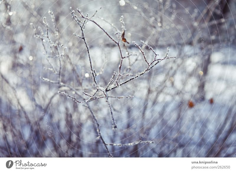 winter ade Natur Pflanze Winter Schönes Wetter Eis Frost Schnee Sträucher kalt weiß glänzend Zweig gefroren Unschärfe Farbfoto Außenaufnahme Nahaufnahme