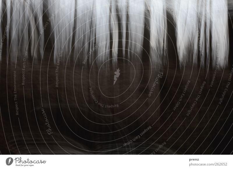 ich sehe den wald Natur Baum schwarz Wald Umwelt dunkel Landschaft grau Linie braun Baumstamm Düsterwald