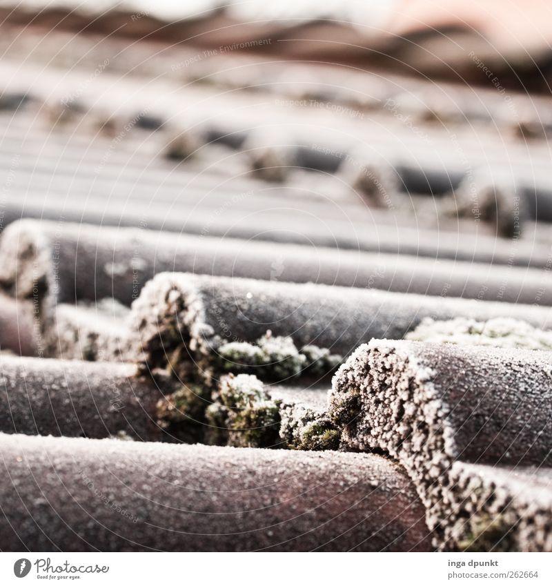Eisdach weiß Winter kalt Stimmung Wetter Klima Frost Dach Bauwerk gefroren Jahreszeiten Moos Raureif Dachziegel
