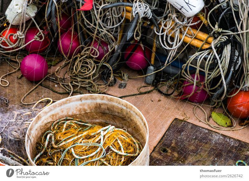 Fischers Baumschmuck 1 Himmel Ferien & Urlaub & Reisen Natur Farbe Meer Herbst Umwelt Küste Ausflug Idylle Seil Hafen violett Ostsee Bucht Steg
