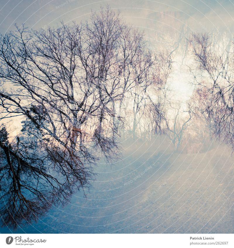 Don´t move Natur Baum Pflanze Umwelt dunkel Landschaft Leben Bewegung Wege & Pfade Garten Luft Kunst Stimmung ästhetisch Urelemente Vergänglichkeit