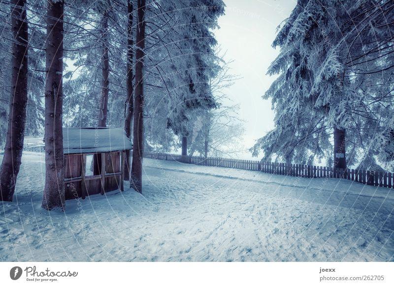 Onkel Tom Natur Winter Nebel Eis Frost Schnee Baum Wald Hütte Wege & Pfade kalt blau schwarz weiß Stimmung ruhig Erholung Idylle Holzhütte Schneelandschaft Zaun