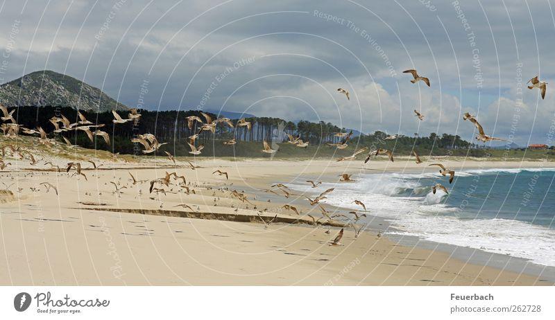 Möwenherde Natur Ferien & Urlaub & Reisen Meer Strand Tier Wolken Ferne Umwelt Berge u. Gebirge Freiheit Vogel Wellen Wind Schwimmen & Baden fliegen Wildtier