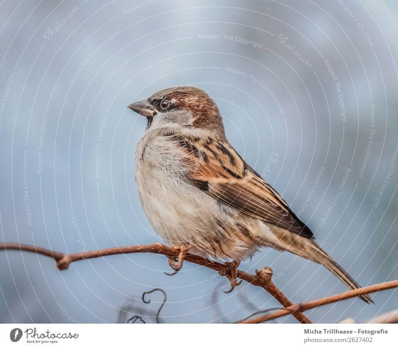 Spatz auf einem Zweig Natur blau Baum Erholung Tier schwarz gelb Auge orange Vogel braun Zufriedenheit Wildtier sitzen Feder Schönes Wetter