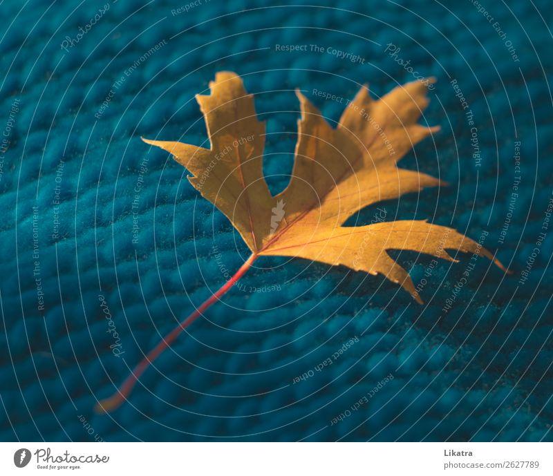 Herbststimmung stricken Natur Blatt Ahornblatt Pullover Schal ästhetisch nachhaltig Stadt Wärme gelb türkis Geborgenheit Warmherzigkeit Gelassenheit rein