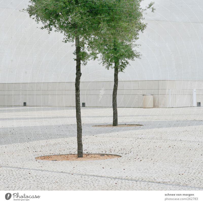 """pracht Umwelt Natur Baum Grünpflanze Haus Gebäude Architektur Mauer Wand Fassade grün weiß """"weiß boden kopfsteinpflastern helligkeit stamm blätter beton wand"""""""