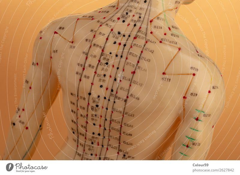 Rücken von Akupunktur Modell Mensch Erholung Gesundheit Gesundheitswesen Chinese Hintergrundbild alternativ beige Physiotherapie Punkte asiatisch Anatomie