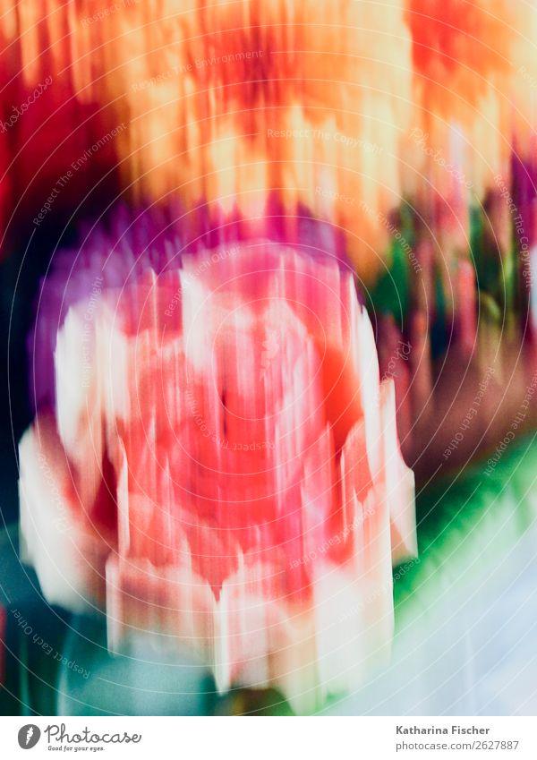 Blumenbild Kunst Kunstwerk Gemälde Pflanze Rose Farn Blühend leuchten blau braun gelb gold grün violett orange rosa rot türkis Dahlien Blütenkelch Farbfoto