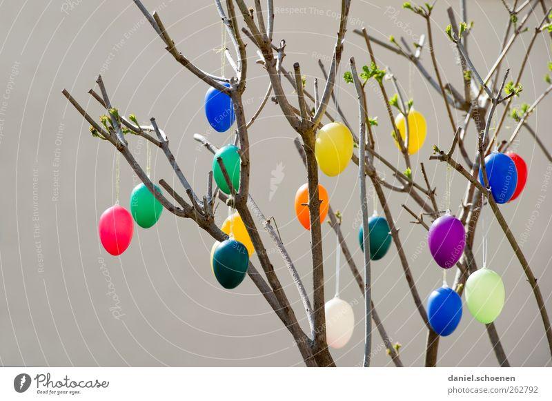 wo ist denn das lila Ei ? blau grün rot gelb Frühling Feste & Feiern Dekoration & Verzierung Ostern Osterei