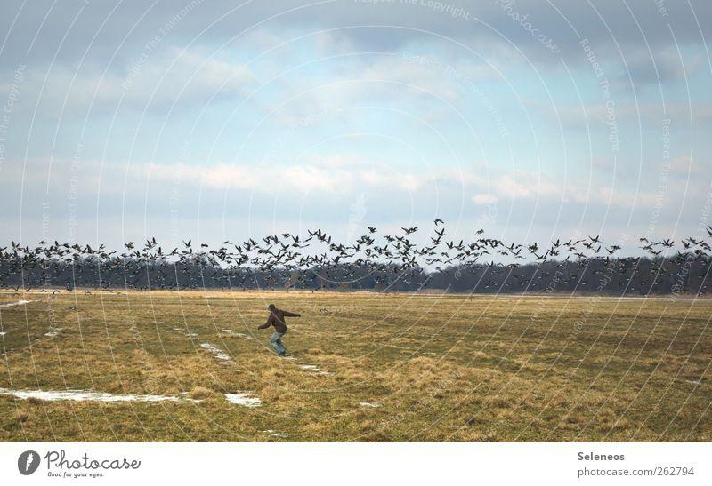 Die Vögel Mensch Himmel Natur Ferien & Urlaub & Reisen Tier Winter Wolken Ferne Umwelt Landschaft Herbst Gras Freiheit Vogel Feld fliegen