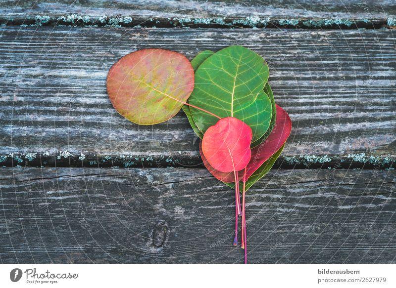 Bunte Herbstdekoration Blatt leuchten ästhetisch mehrfarbig gelb grün rot Gefühle Farbe Zufriedenheit Vergänglichkeit herbstlich Herbstfärbung Herbstbeginn