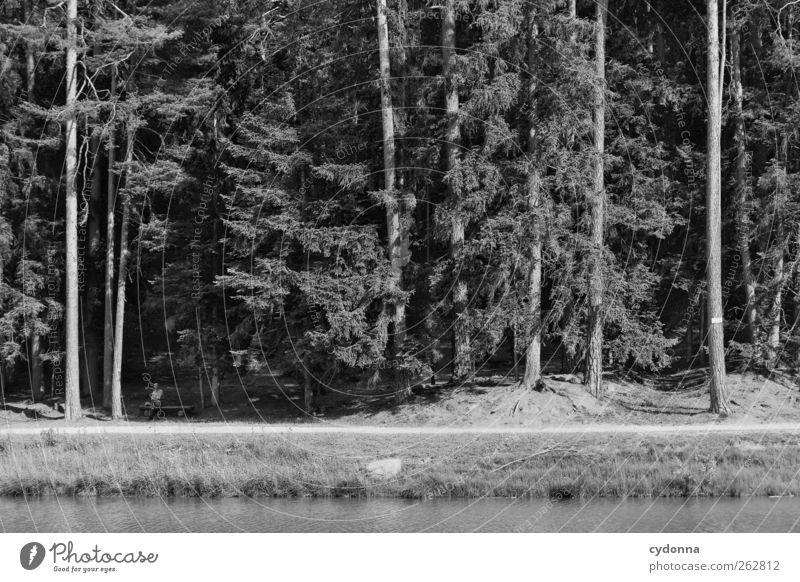 Naturerlebnis Erholung ruhig Ferien & Urlaub & Reisen Freiheit Mensch Mann Erwachsene Männlicher Senior 1 45-60 Jahre Baum Wald Teich Wege & Pfade Bank sitzen