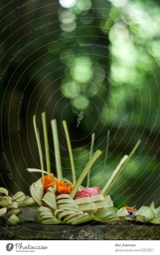 blubberblasen aus dem opferkorb schön Blume Dekoration & Verzierung authentisch Kultur Schalen & Schüsseln dankbar Moral Indonesien Bali Opfergaben