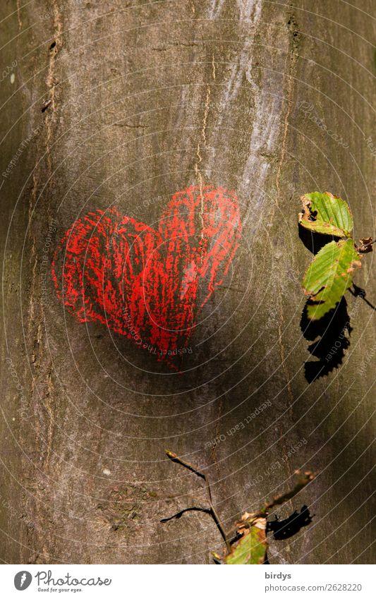 1800stes - Mehr Herz bitte Natur Sommer grün rot Baum Blatt Wärme Liebe Gefühle Glück grau Freundschaft authentisch Lebensfreude Schönes Wetter