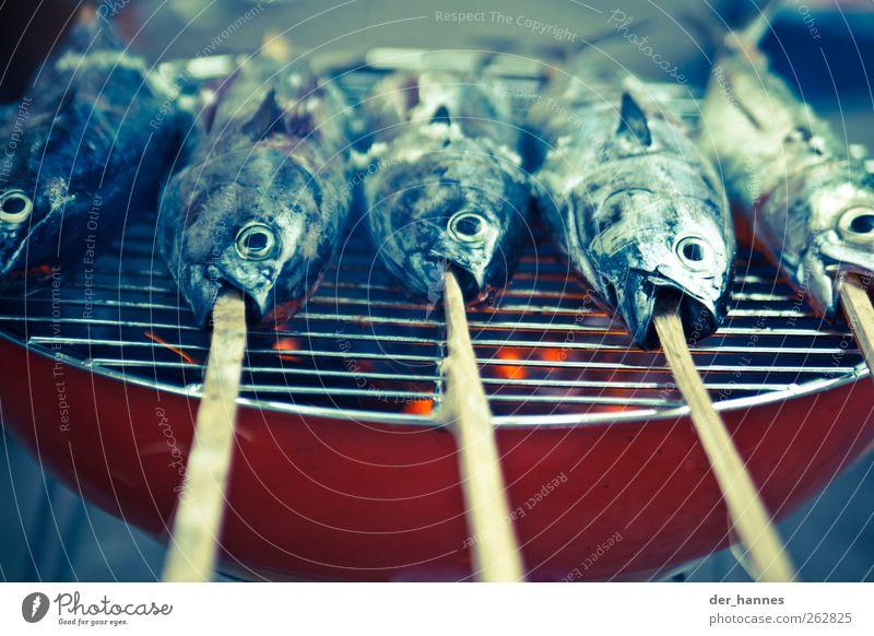 Ausgeblubbert Lebensmittel Fisch Grillfisch Tier Totes Tier 4 Thunfisch Farbfoto Nahaufnahme Detailaufnahme Menschenleer Tag Licht Schatten Kontrast