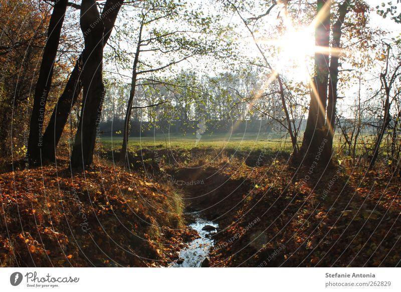 Herbstsonne Wasser Baum Sonne ruhig Wald Landschaft Herbst Zufriedenheit Schönes Wetter Flussufer Bach
