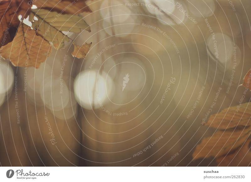geistige umnachtung ... Umwelt Herbst dunkel braun Gefühle Stimmung Wandel & Veränderung Blatt Farbfoto Gedeckte Farben Außenaufnahme Menschenleer
