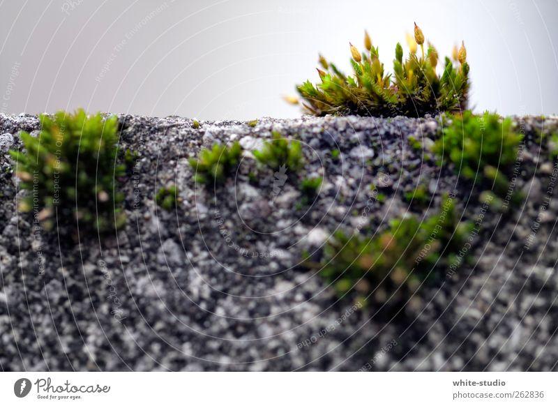 Jungle in the City Natur Wand grau Mauer Garten Wachstum Lebensfreude Moos nachhaltig Wurzel Riedgras Mauerpflanze Gesetze und Verordnungen Naturgewalt Naturliebe Gemäuer