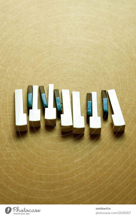 Akkordeon Detailaufnahme Musikinstrument Tastatur Klaviatur Taste Tasteninstrumente Tastsinn Keyboard Klang Klavier Musiker Musikhit Musiknoten oktave Spielzeug
