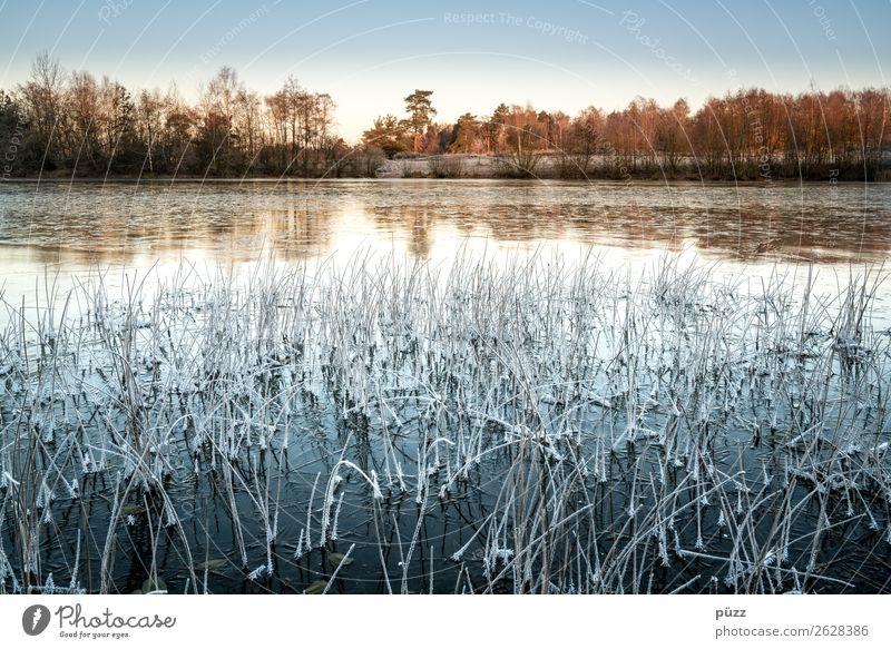 Frrrrrrost Natur Pflanze blau Wasser Landschaft Baum Einsamkeit Winter Umwelt kalt Küste Gras See orange Horizont Eis