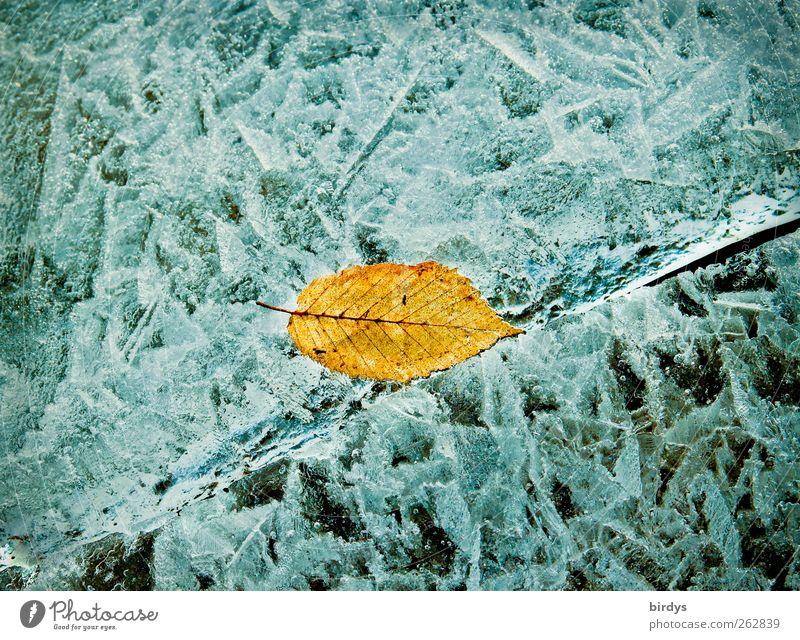 Verwandliung Winter Eis Frost Blatt See glänzend leuchten ästhetisch außergewöhnlich positiv kalt Wandel & Veränderung gelb Eiskristall Spalte Muster