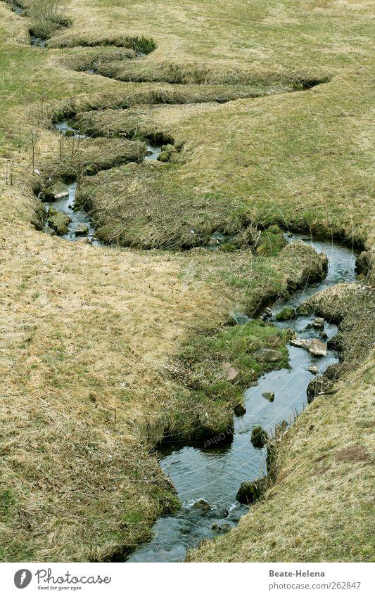 Wasserschlange - vom Eise befreit Natur blau grün schwarz Landschaft Gras Frühling Glück Trinkwasser Beginn ästhetisch Jahreszeiten Lebensfreude Flussufer Bach