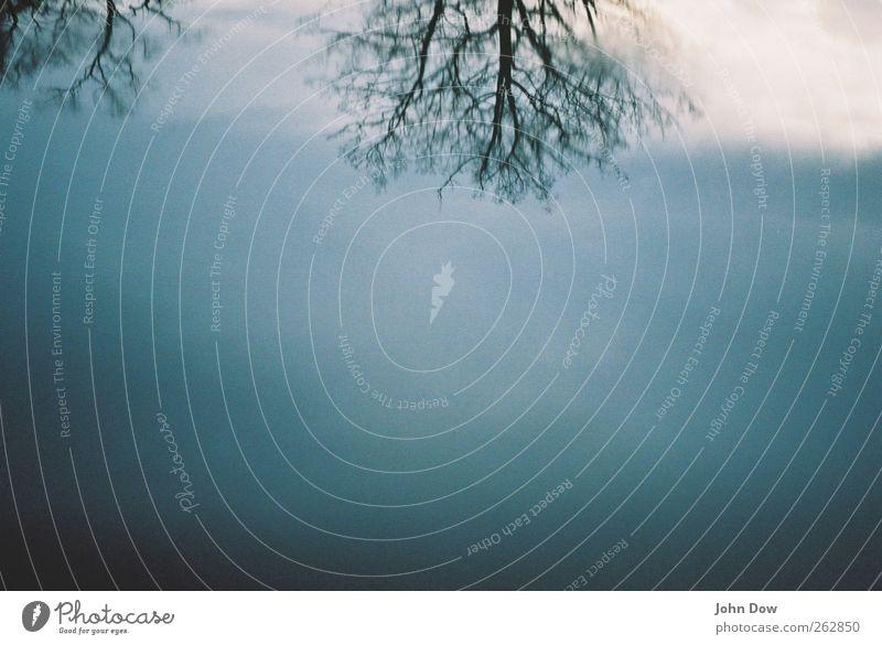 Upside Down Natur Wasser Baum Winter kalt Luft träumen Eis Unendlichkeit Wolkenloser Himmel Geäst Vignettierung Schwerelosigkeit verkehrt verzweigt