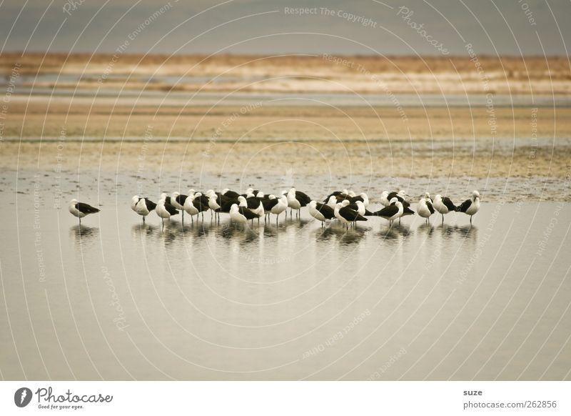 Vogelbad Himmel Natur Sommer Tier ruhig Umwelt Landschaft See hell Erde Vogel warten Wildtier Klima Streifen Tiergruppe