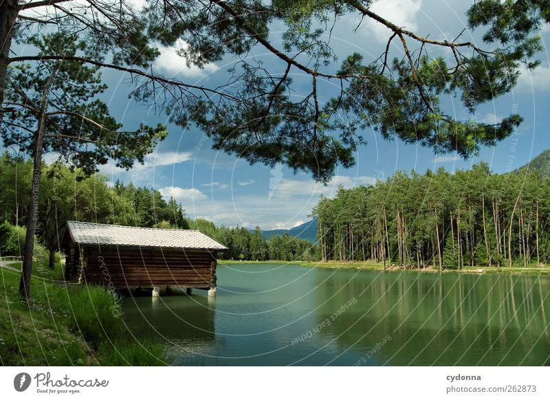 Bootshaus am Waldsee Natur Baum Ferien & Urlaub & Reisen Sommer Einsamkeit ruhig Wald Erholung Umwelt Landschaft Freiheit See Ausflug Tourismus Alpen Seeufer