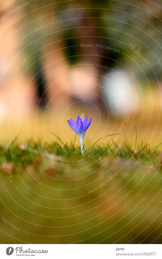 spring Natur blau schön Pflanze Blume Gras Frühling klein Garten Park natürlich frisch neu Schönes Wetter Grünpflanze