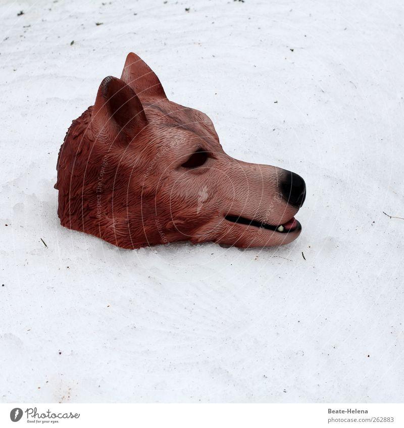 Es war einmal Natur weiß Winter Tier Schnee Gefühle Traurigkeit braun Wildtier groß außergewöhnlich bedrohlich Fell Tiergesicht Maske stark