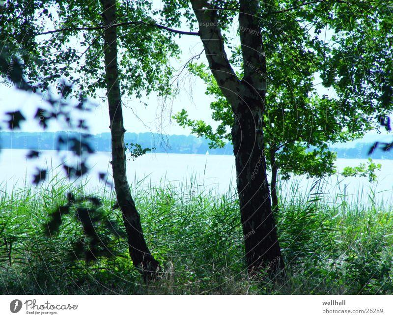 See Baum Blatt Sträucher