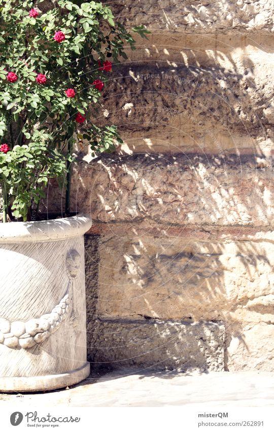 Somewhere far. grün Sommer Mauer Zufriedenheit ästhetisch Dekoration & Verzierung Rose Idylle Theater Langeweile Blumentopf mediterran dezent Gleichgültigkeit Mauerpflanze Schattenspiel