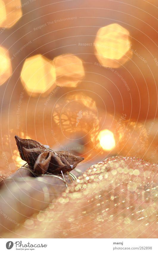 Zimt und Anis Weihnachten & Advent schön ruhig gelb Erholung Gefühle Stimmung Feste & Feiern braun Zufriedenheit gold glänzend ästhetisch Dekoration & Verzierung Häusliches Leben Kitsch