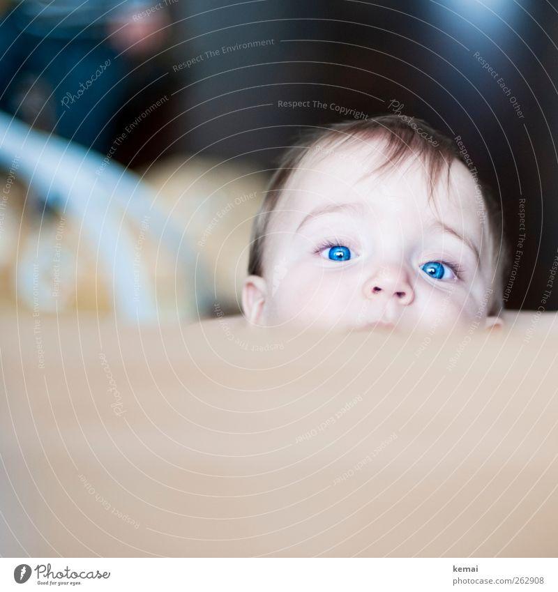 Dreikäsehoch Wohnung Tisch Mensch feminin Kleinkind Leben Kopf Haare & Frisuren Gesicht Auge Nase 1 1-3 Jahre Blick klein niedlich blau blauäugig intensiv