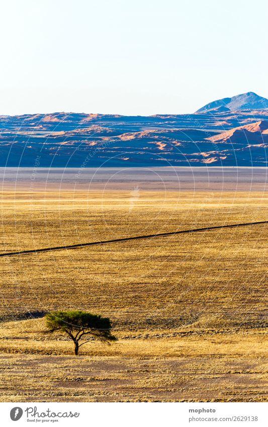 Afrikanische Steppe Ferien & Urlaub & Reisen Tourismus Natur Landschaft Wärme Dürre Baum Gras Wüste Straße Wege & Pfade Linie heiß trocken Einsamkeit Idylle