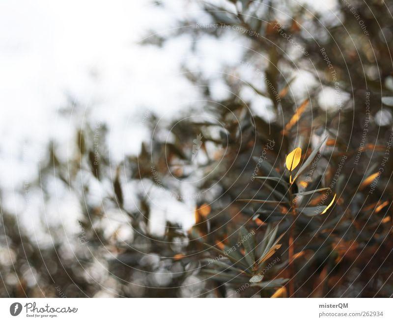 Abendlicher Olivenbaum. Sommer Blatt ruhig Kunst Zufriedenheit Wind ästhetisch Sommerurlaub mediterran abgelegen friedlich südländisch Olivenhain Olivenblatt