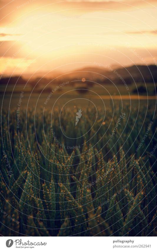 Am Anfang Himmel Natur Baum Pflanze Sonne Sommer Wolken Landschaft Wiese Herbst Feld gold Wachstum Romantik Hügel Schönes Wetter