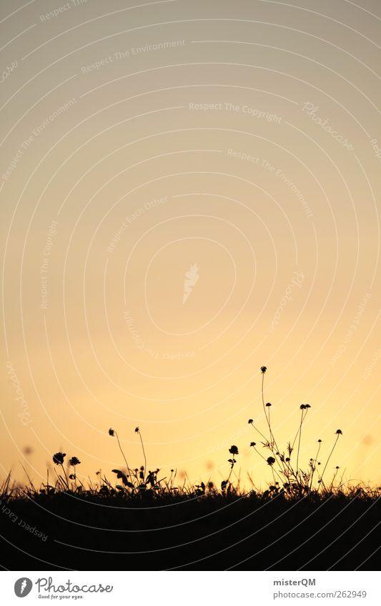 Guten Morgen Frau Wiese. Umwelt Natur Landschaft Pflanze ästhetisch Zufriedenheit friedlich Dorf Gras Feld Wiesenblume Sonnenlicht harmonisch zeitlos Silhouette