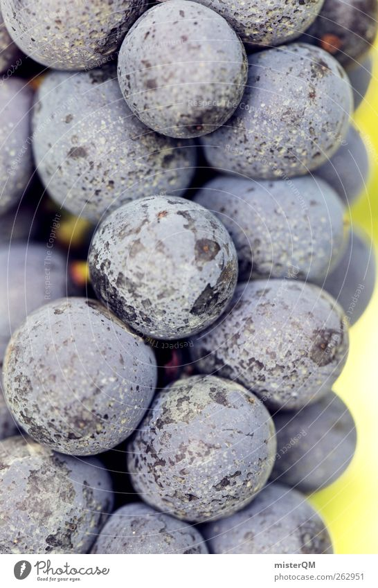 reif. Natur Pflanze Landschaft Umwelt ästhetisch genießen Wein Wein Beeren reif ökologisch Weinlese Weinberg Weinbau Weintrauben Rotwein