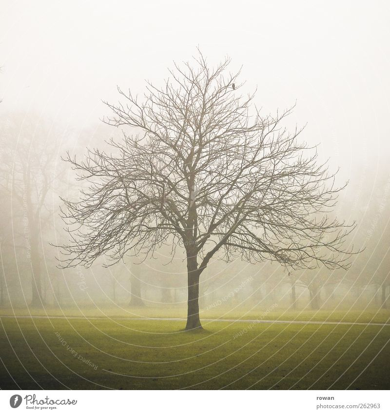 baum Natur grün Baum Winter Umwelt dunkel Landschaft kalt Herbst Park Nebel trist Vergänglichkeit Ast gruselig Unwetter