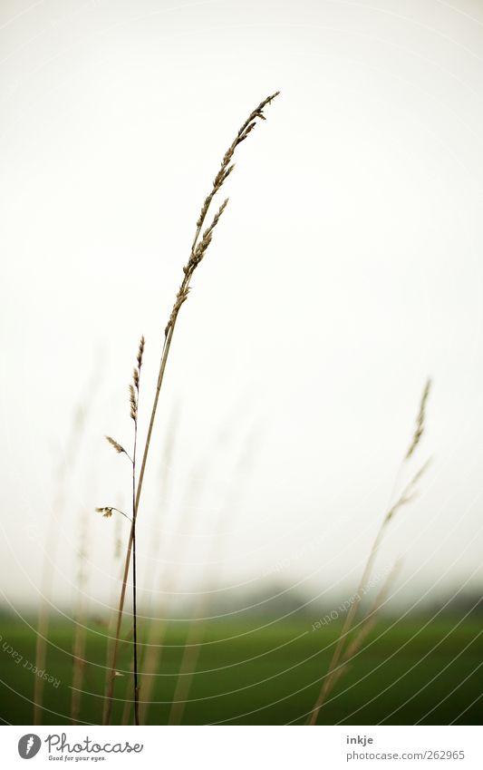 grün Umwelt Natur Landschaft Pflanze Luft Himmel Wolkenloser Himmel Horizont Sommer Herbst Klima Gras Wildpflanze Wiese Feld Stadtrand Menschenleer dünn einfach