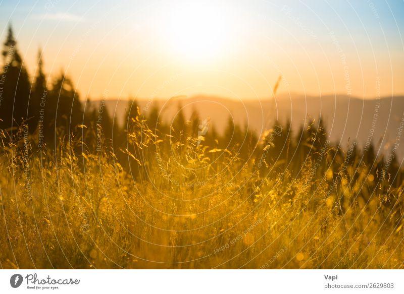 Himmel Ferien & Urlaub & Reisen Natur Himmel (Jenseits) Sommer Pflanze blau Farbe schön Landschaft weiß rot Sonne Baum Wolken Wald