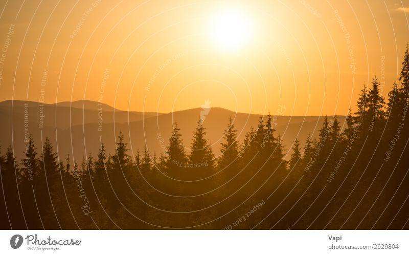 Himmel Ferien & Urlaub & Reisen Natur Himmel (Jenseits) Sommer Farbe schön grün Landschaft weiß rot Sonne Baum Wolken Wald Ferne