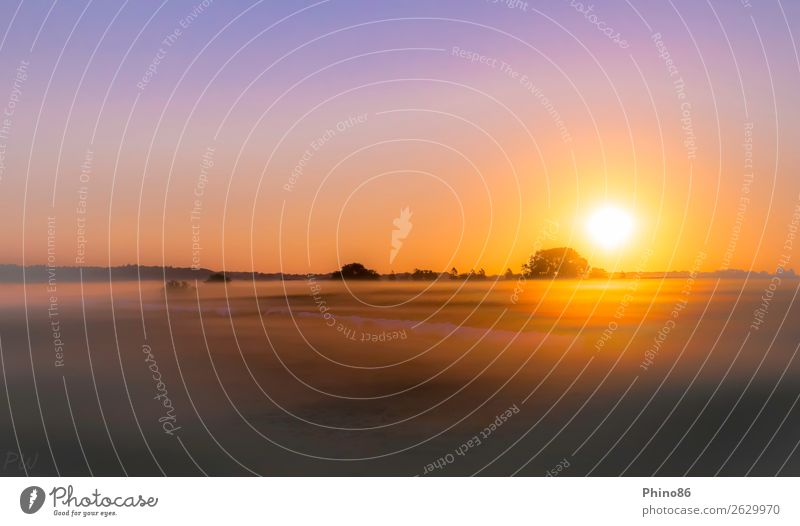 "Sonnenaufgang im ""Nebeltal"" Natur Landschaft Pflanze Wolkenloser Himmel Sonnenuntergang Sonnenlicht Sommer Schönes Wetter Baum Gras Wiese Feld Moor Sumpf Dorf"